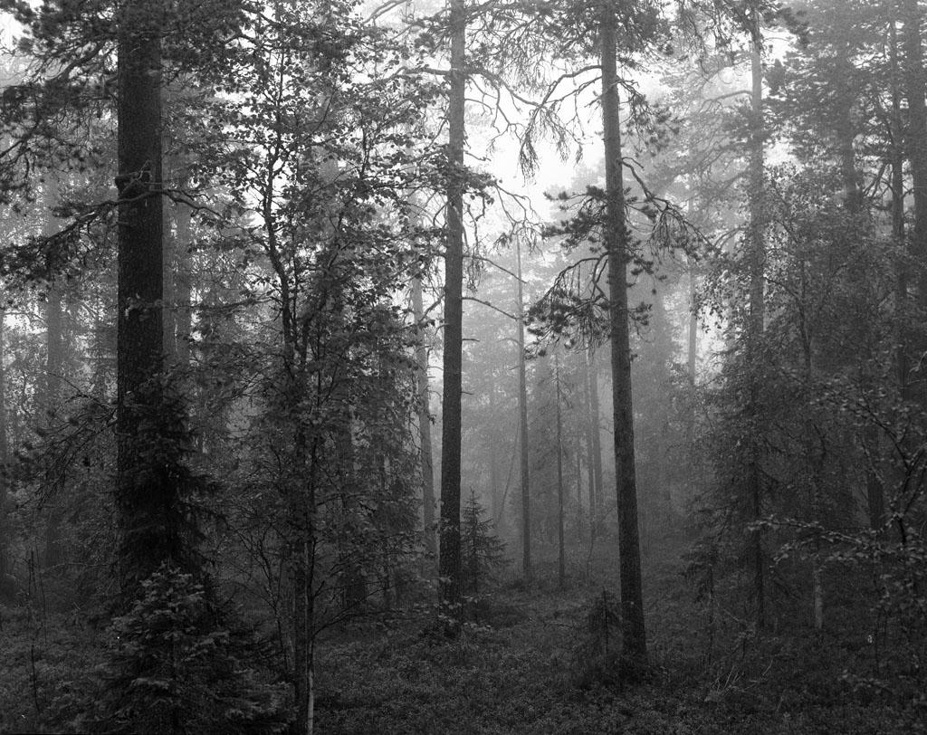 Pyhä-Luosto - 5 am