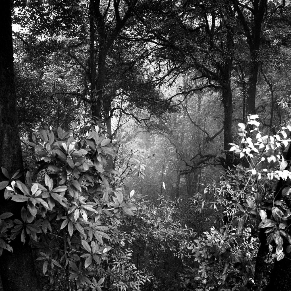 Darjeeling Hills, India