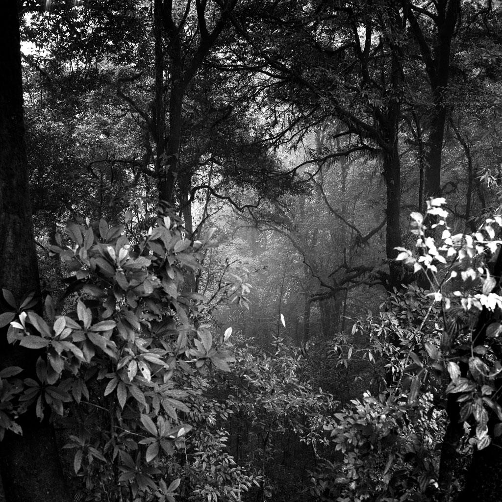 darjeelinghills_1024px