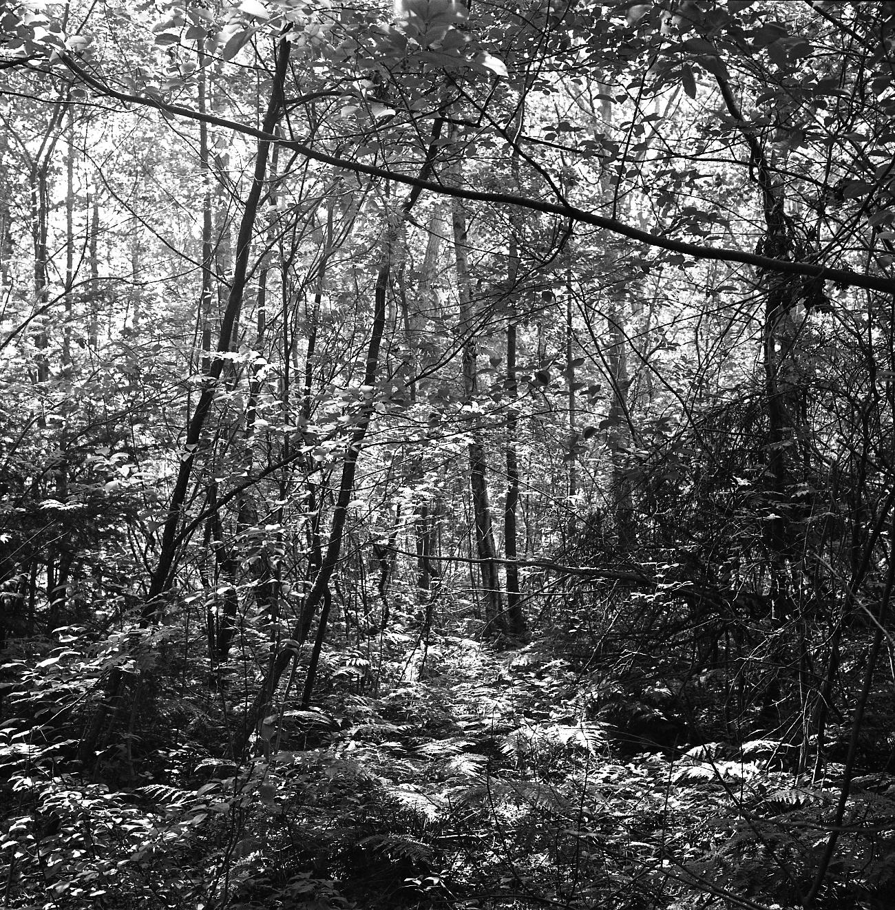 Elfland forest, Vlieland