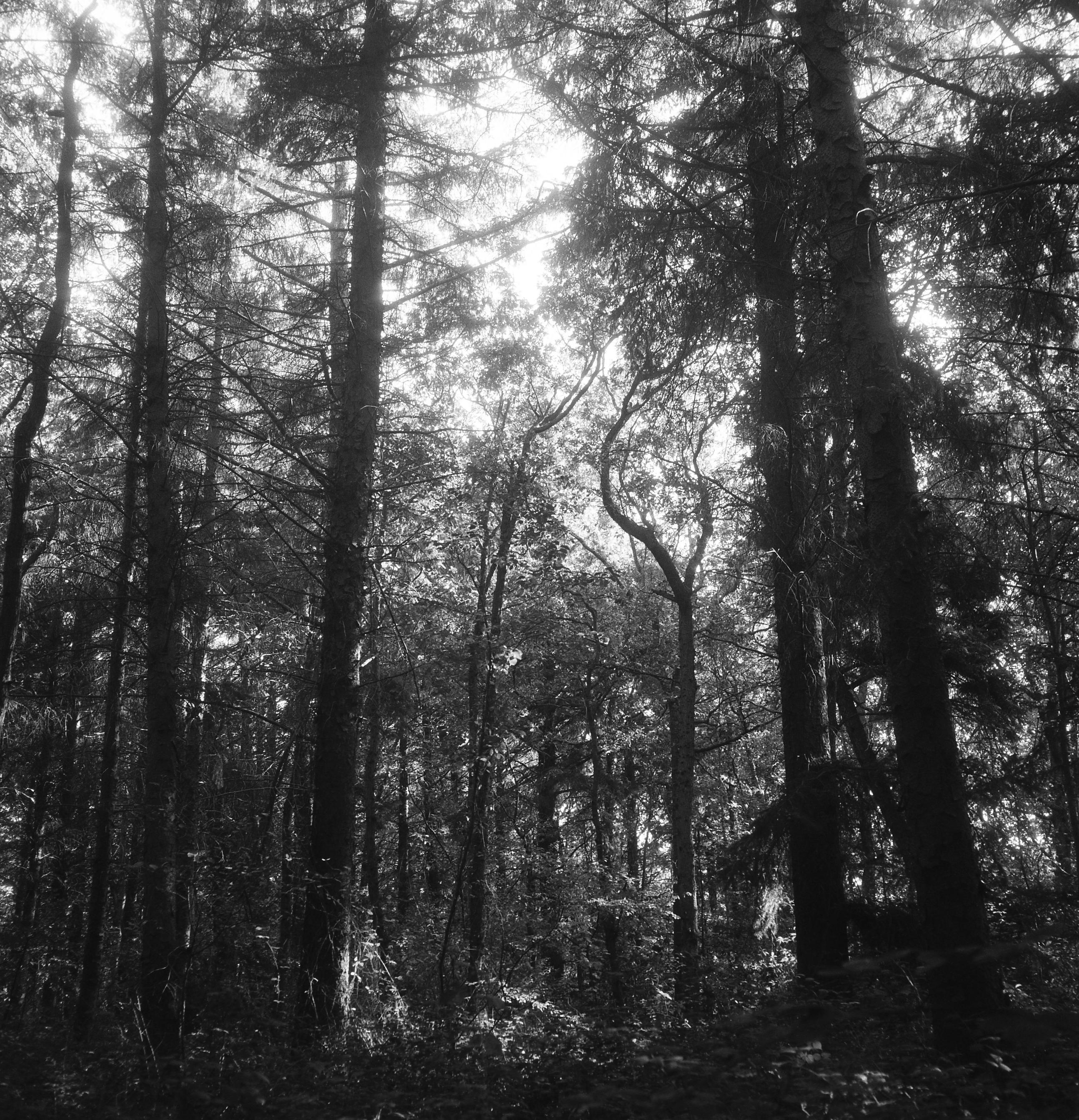 Vlieland bomenland