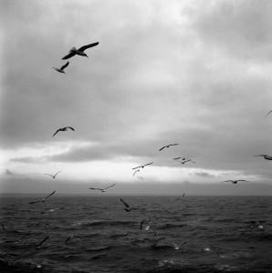 Seagulls in November